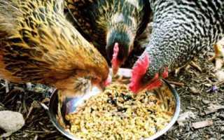 Болезнь у курей понос. Понос у кур: причины и схемы лечения