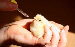 Как давать глюкозу цыплятам. Глюкоза для цыплят