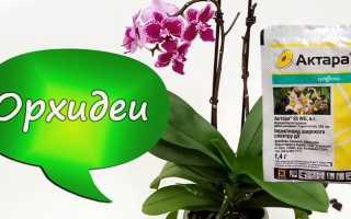 Актара для орхидей инструкция по применению. Как обработать орхидею Актарой (+фаленопсис)