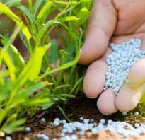 Для чего нужен фосфор для растений. Фосфорное питание растений
