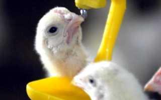 Антибиотики в птицеводстве. Антибиотики в птицеводстве. Угроза или панацея?