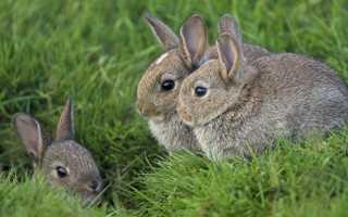 Да что вы знаете о кроликах. 15 любопытных фактов о кроликах