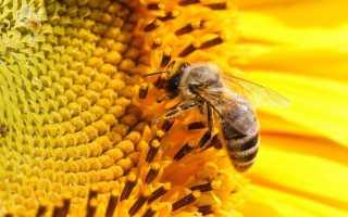 Дом для пчел как называется.