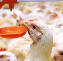 Асд 2 фракция для птицы. АСД-2 для кур: инструкция по применению антисептика-стимулятора