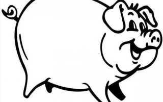Как заколоть поросенка в шею. Как зарезать свинью самостоятельно: все секреты и тонкости забоя