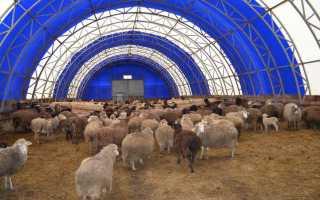 Как строить овчарню. Как построить овчарню: пошаговая инструкция