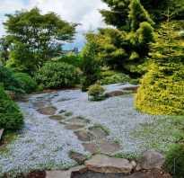 Декоративные елки для сада фото. 65 идей использования ели в ландшафтном дизайне: правила посадки и ухода