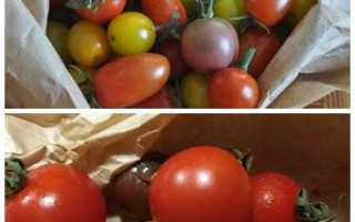Как вырастить помидоры черри в открытом грунте. Опыт выращивания томатов черри в открытом грунте