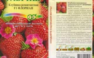 Клубника флориан описание сорта отзывы. Земляника Флориан F1 из семян