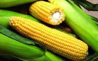Выращивание кукурузы на урале. Кукуруза на Урале и в Сибири: выращивание в открытом грунте на даче