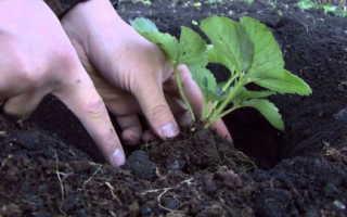 Выращивание клубники на спанбонде. Как правильно посадить клубнику под спанбонд или пленку