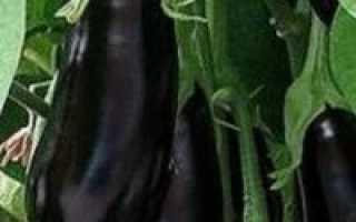 Баклажаны эпик отзывы фото урожайность. Баклажан «Эпик» F1