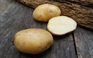 Картофель лорх описание сорта фото. Картофель сорта Лорх: отзывы и характеристика
