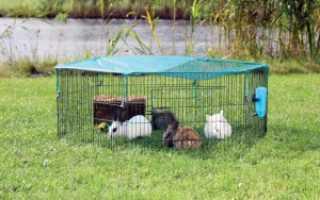 Загон для кролика. Изготавливаем загон для кролей
