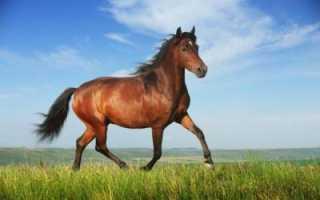 Как запрячь лошадь в телегу. Как нужно запрягать лошадь