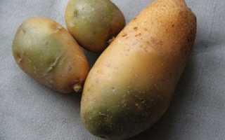 Вред солонина. Пригоден ли в пищу позеленевший картофель – опасность соланина