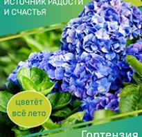 Боярышник садовый крупноплодный польза и вред. Боярышник крупноплодный – полезные свойства, выращивание и вкусные рецепты