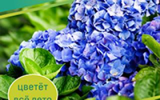 Белые цветы осенью. Список многолетних цветов, цветущих от ранней весны до поздней осени