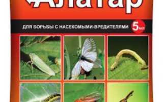 Как разводить алатар. Как использовать препарат «Алатар» в саду и огороде: инструкция по применению инсектицида