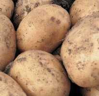 Картошка санте. Популярный картофель «Санте» : описание сорта, вкусовые качества, фото, характеристика