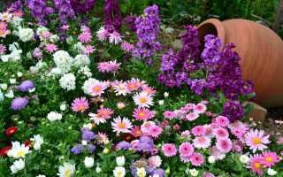 Бордюрные цветы многолетние низкорослые. Бордюрные цветы: выбираем окантовку для клумбы и садовых дорожек