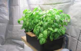 Выращивание рассады гидропонным способом. Выращивание рассады на гидропонике