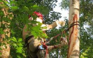 Как восстановить кору на яблоне. Как лечить раны у деревьев