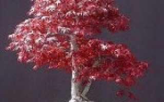 Бук семена. Семена бука лесного / Fagus sylvatica, ТМ OGOROD — 5 семян