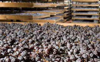 Вино из вареного винограда. Вино из подвяленного винограда
