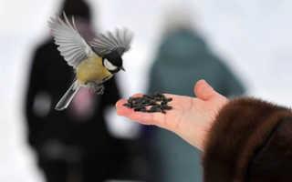 Какие крупы едят воробьи. Покормите птиц, только не рисом!