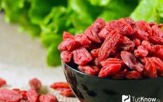 Годжи как выращивать в домашних условиях. Как выращивать ягоды годжи в домашних условиях?