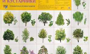 Деревья в москве названия и фото. Деревья подмосковья фото и названия