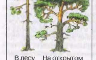 В лесу растет ковыль. Биология (6 класс)/Растение — живой организм