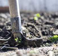 Как правильно окапывать деревья. Главные разделы
