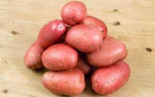 Картофель сорт журавинка описание фото. Розовый картофель «Журавинка»: описание сорта и отзывы о выращивании