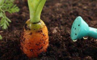 Как поливать морковь соленой водой. Полив моркови солью в открытом грунте