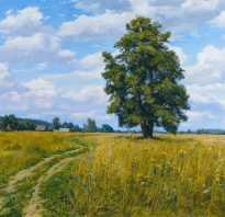 Дерево липа фото и описание. Дерево липа: фото, описание, посадка
