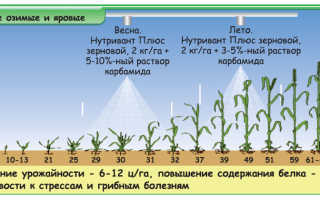 Карбамид по листу пшеницы доза. Некорневые подкормки. Основные заблуждения и ошибки