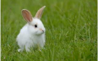 Имена для кролика мальчика. Лучшие имена для кроликов