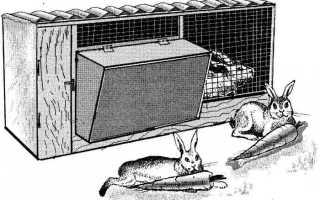 Как сделать кролятники своими. Как сделать крольчатник своими руками: примеры самодельных конструкций