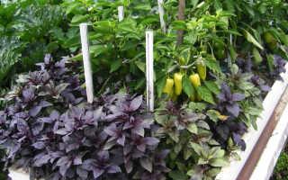 Какие овощи лучше выращивать в теплице. Овощные культуры для совместного выращивания в теплице