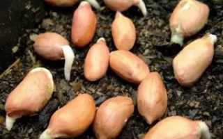 Как вырастить арахис на даче в подмосковье. Как вырастить арахис на даче в подмосковье