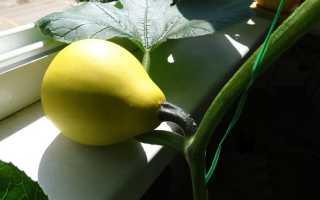 Как вырастить тыкву в квартире. Выращивание тыквы на балконе