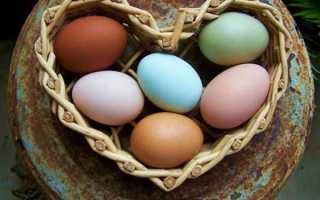 Как называются курицы которые несут голубые яйца. Голубые яйца куриные: кто несет зеленые и синие яйца – породы кур