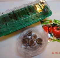 Выращивание рассады томатов в торфяных таблетках. Как сажать и выращивать томаты в торфяных таблетках
