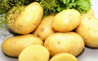 Картофель лорд описание. Картофель глазами меня… Как сажала и сорта выбирала. Часть 1