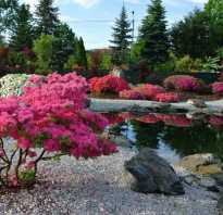 Быстрорастущие кустарники для дачи. Декоративные кустарники для дачи, фото и названия — какие выбрать