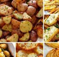 Картофель лорх характеристика сорта отзывы вкусовые качества. Описание сорта картофеля Лорх