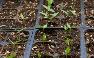 Какой торф лучше для рассады. Какая земля лучше для рассады − садовая или покупная?