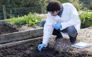 Карбамид применение в садоводстве. Мочевина (карбамид): удобрение для различных культур в вашем саду и огороде
